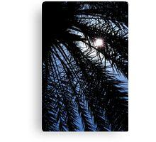 Palm rays Canvas Print