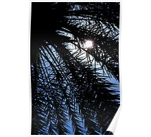 Palm rays Poster