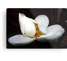 magnolia blossom fan dancer Metal Print