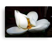 magnolia blossom fan dancer Canvas Print