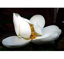 magnolia blossom fan dancer Photographic Print