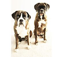 Together We Stand -Boxer Dogs Series- Photographic Print