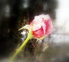 rosebud in the snow  by Dawna Morton