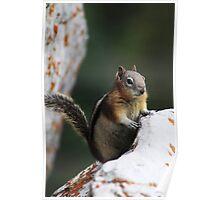 Friendly Chipmunk Poster