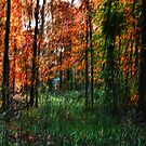 Autumn Woods by David  Guidas