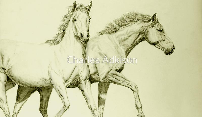 Two Horses by gr8erAchilles