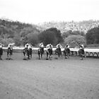 Horse Race by gnolanphoto