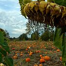 Grandpa's Pumpkin Patch by Nick Boren