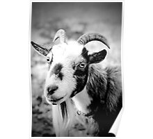 The Billy Goat Poster