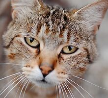 The Kitty is Looking at Me.... by BPhotographer