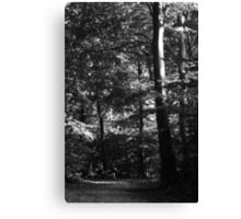 Running through the trees ... Canvas Print