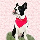 Nessie the boston by Cazzie Cathcart