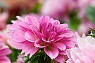 Spring Dahlia by Renee Hubbard Fine Art Photography