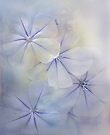 beautifully blue by Teresa Pople