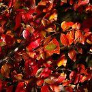 October. II by Bluesrose