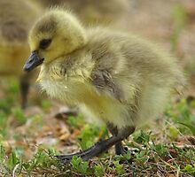 Baby's First Week  by Betsy  Seeton