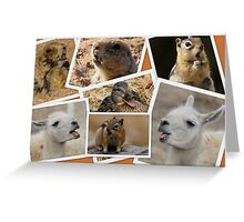 Animals Have Plenty To Say  Greeting Card