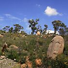 John Forrest National Park II by Catherine Liversidge