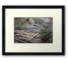 ready to snap Framed Print