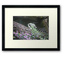 dragon dreaming Framed Print