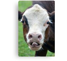 Cheeky Cow - NSW Canvas Print