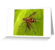 Louie the Fly Greeting Card