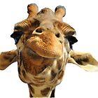 giraffe by lpollar