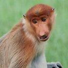 Male Proboscis Monkey by Allan Saben