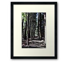 hollybank reserve Framed Print