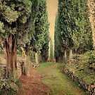 Whispering Cypress-Sant' Anna in Comprena, Tuscany by Deborah Downes