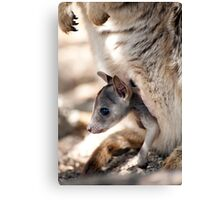 Checking it out - joey in the pouch  Canvas Print