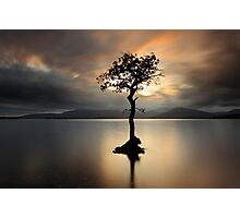 Lone tree on Loch Lomond Photographic Print