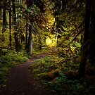 Stay On The Trail by Charles & Patricia   Harkins ~ Picture Oregon