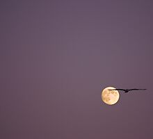 flying o'er the moon by lucy loomis