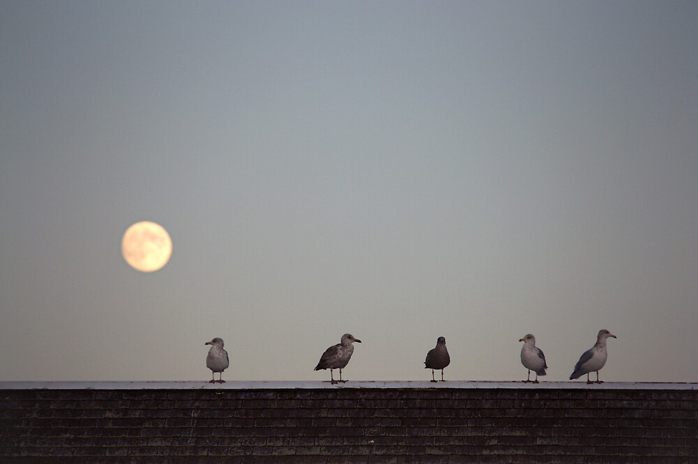 standing in the moonlight by lucy loomis