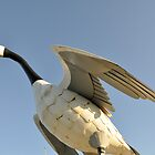 The Wawa Goose by John Callan