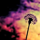 Dandelion by MickDodds