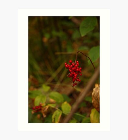 Wild Berries in Forest Art Print