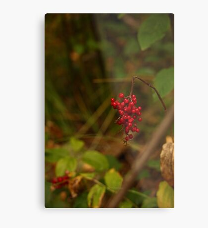 Wild Berries in Forest Metal Print