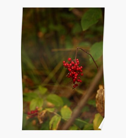 Wild Berries in Forest Poster