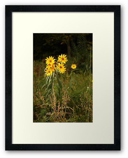 Wild Yellow Flower by Thomas Murphy