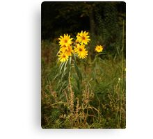 Wild Yellow Flower Canvas Print
