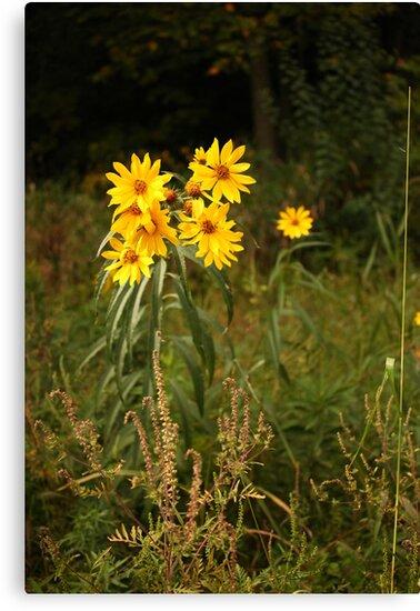 Wild Yellow Flower by Thomas Murphy