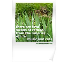 Cat lovers Postcard Poster