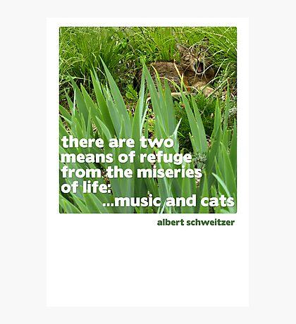 Cat lovers Postcard Photographic Print