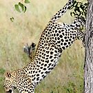 Leaping Leopard by skaranec1981