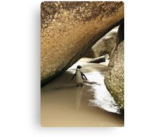 Jackass Penguin Canvas Print