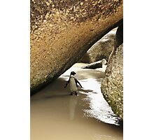 Jackass Penguin Photographic Print