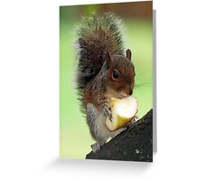 Baby Squirrel Greeting Card