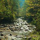 Mountain Stream by gazmercer
